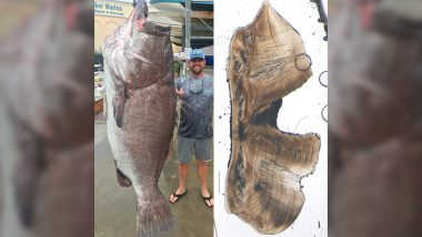 50-Year-Old Massive Fish Weighing 350-Pounds Caught in Southwest Florida (See Pics)