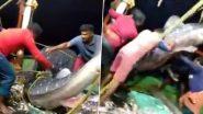 Kozhikode Fishermen Release Giant Endangered Whale Shark Back in The Sea, Watch Viral Video From Kerala
