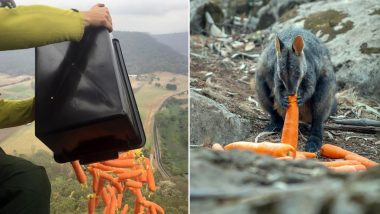 Australia Bushfire Crisis: Authorities Airdrop Carrots and Sweet Potatoes for Animals Stranded in Wildfires, See Pics and Videos