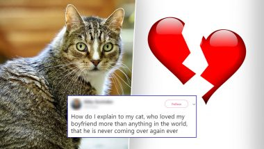 Woman's Cat Loved Her Boyfriend More, Twitterati Comes to Rescue With Similar Stories