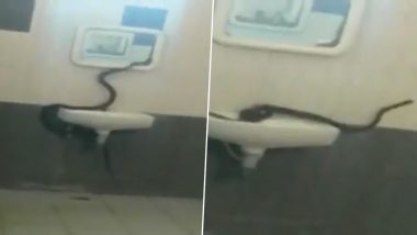Cobra Seen Inside Girls Hostel of Bharathiar University Campus in Coimbatore, Watch Video