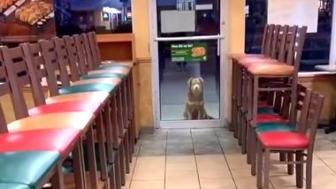 Stray Dog Nicknamed 'Subway Sally' Visits Sandwich Store in US Every Night for a Year to Have Dinner (Watch Viral Video)