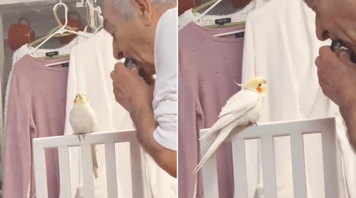Grandfather Plays Harmonica to Cockatiel! Viral Video Shows Bird Happily Whistling to the Music