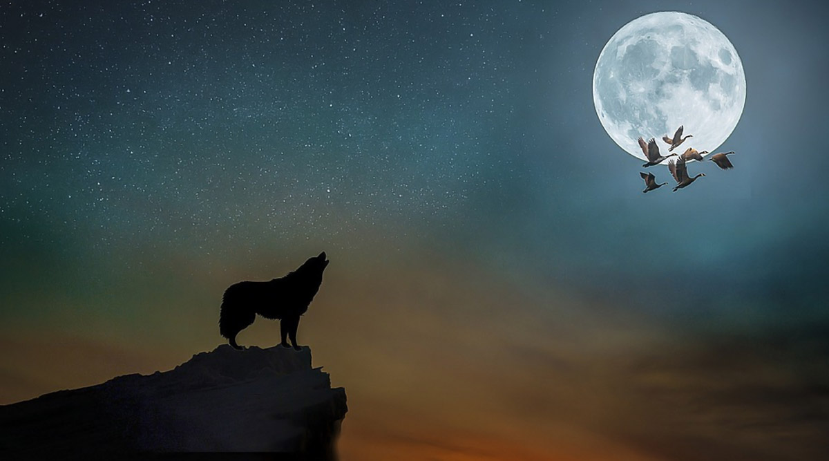 Wolf Moon 2020 Live Streaming Today: How to Watch January Full Moon Coinciding With Penumbral Lunar Eclipse (Chandra Grahan) in India?