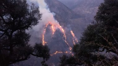Forest Fire in Himachal Pradesh: Massive Blaze Engulfs Jungle in Chaura Area of Kinnaur District