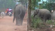 Elephant Attack in Bhubaneswar: Four Dead, Six Injured After Wild Elephant Enters Residential Areas; Operation  to Track Tusker Underway