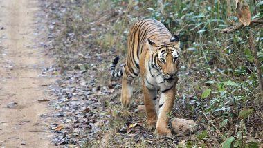 Uttarakhand: Construction of Laldhang-Chillarkhal Road Connecting Jim Corbett & Rajaji Tiger Reserve to Start Soon