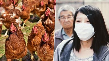 H5N1 Bird Flu Outbreak Reported in China Amidst the Coronavirus Crisis; From Symptoms to Risks, Everything You Want to Know About Avian Flu