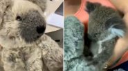 Baby Koala Rescued From Australian Bushfire Seeks Comfort in Grey Teddy Bear After Losing Mother (Watch Emotional Video)
