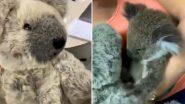 Baby Koala Rescued From Australian Bushfire Seeks Comfort in Grey Teddy Bear After Losing Mother (Watch Emotional Video)