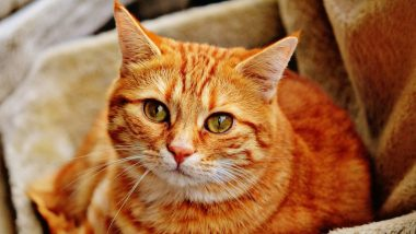 Cat Tests Positive For Coronavirus in Belgium After Being Infected by Owner