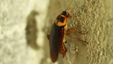 Brisbane Student Offers $20 to Anyone Who Can Kill 'Abnormally Large' Cockroach in His Kitchen