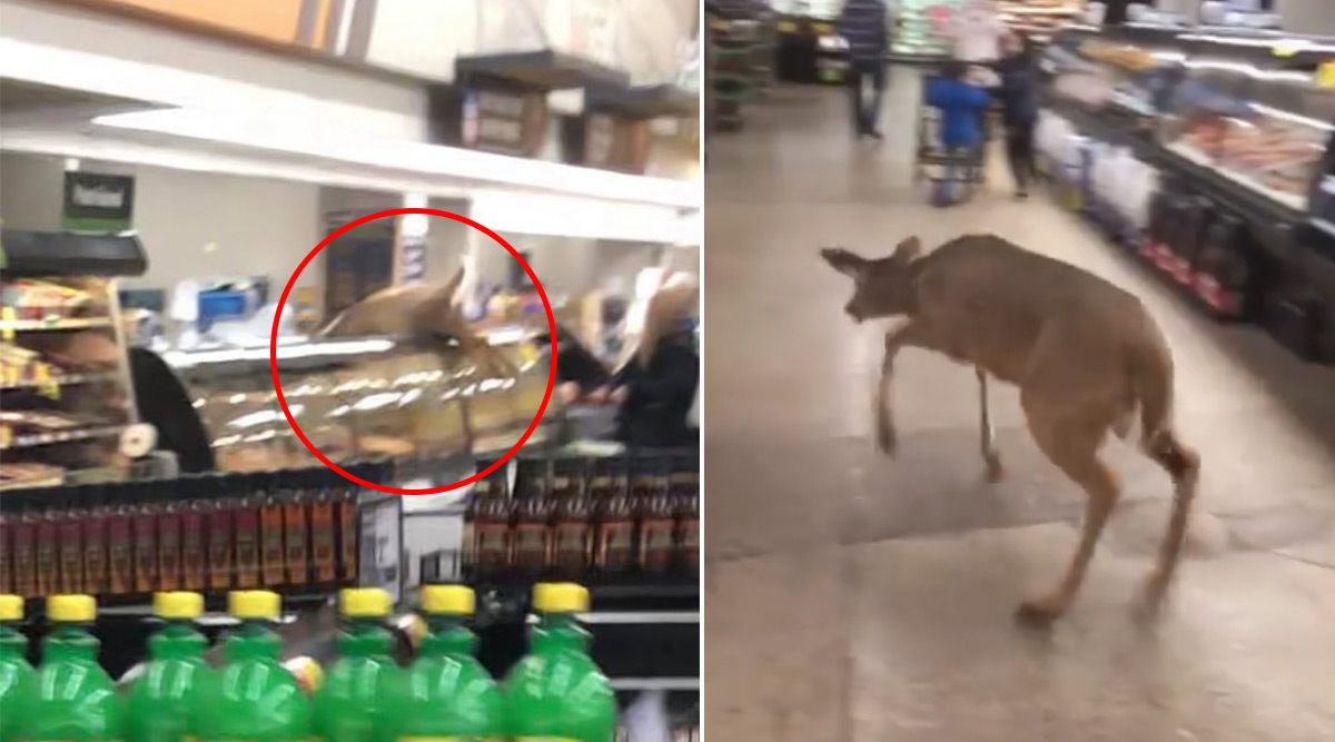 Deer Runs Through Grocery Store in Indiana Startling Shoppers, Video Goes Viral