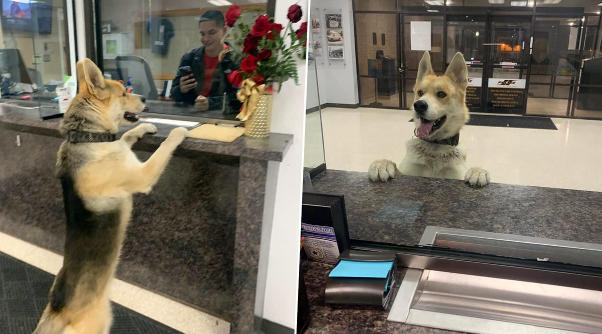Missing Dog Walks Into Police Station to Report Himself and Then Returns Home, 'Good Boy' Impresses Netizens