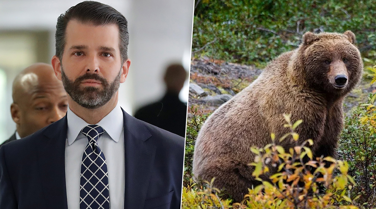 Donald Trump Jr. Granted Permission to Hunt Alaska Grizzly Bear For $1,160, Animal Lovers Furious