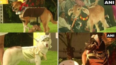 PAW-Dorable! Dressed Up Pets Take Part in Chennai Pet Fashion Show (View Photos)