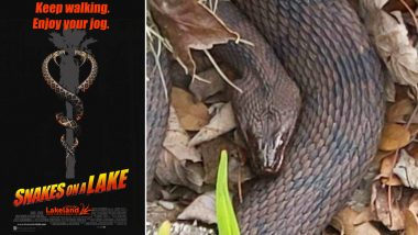 Snake Sex: Mating Season of Serpents Prompts Closure of Florida Park