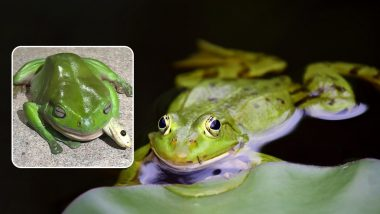 Frog Caught Eating One of The Most Venomous Snakes in The World! (View Pics)