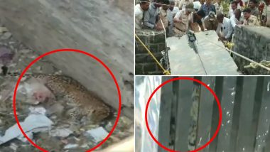 Leopard And Puppy Rescued From 30-foot-deep Dry Well in Maharashtra's Tembhe Village; Watch Video