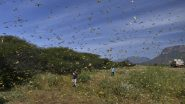 Locust Attack in India: Where 'Tiddi Dal' Came From And Where All It Has Spread? 10 Updates
