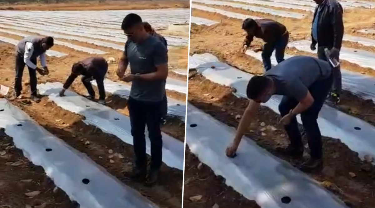 MS Dhoni Turns Farmer Ahead of IPL 2020 Comeback, Ploughs Seeds of Papaya and Watermelon in the Field (Watch Video)