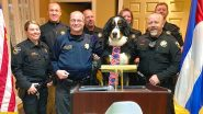 Parker, The Snow Dog Elected as The Honorary Mayor of Georgetown in Colorado (See Pictures)