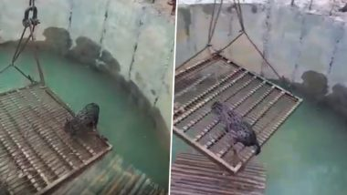People Save Cat From Drowning in Odisha Using Pulley, Video Goes Viral