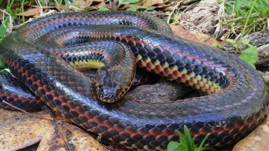 Rare Rainbow Snake Spotted at Florida's Ocala National Forest First Time in 50 Years (See Pictures)