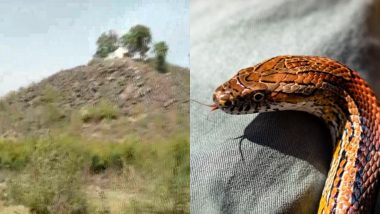 Snakes Surround Gold Mine in Sonbhadra! Deadly Reptiles Present at Region Where Reportedly 3,000 tonnes of Gold is Found