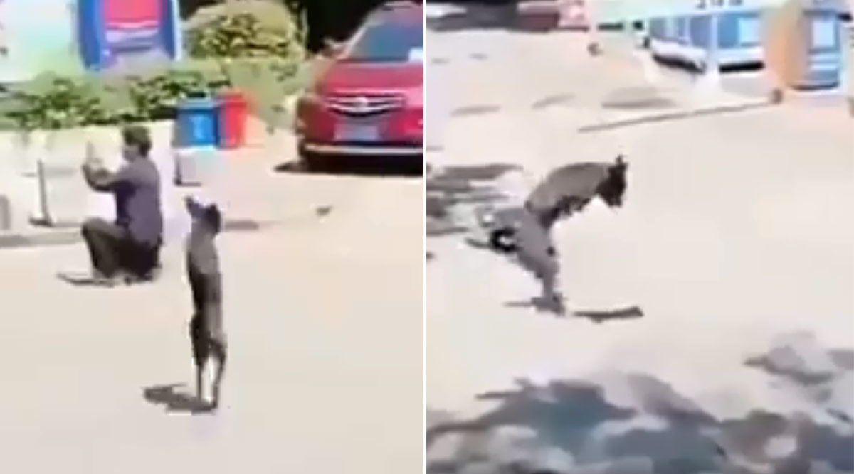 Video of Two-Legged Dog Crossing the Road in High Spirit Is Inspiring Tweeple