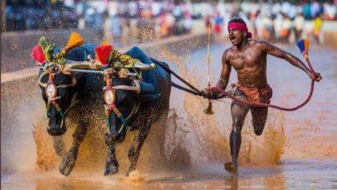 Srinivasa Gowda, Kambala Buffalo Jockey Reportedly Runs Faster Than Usain Bolt, Covers 100 meters in 9.55 secs in Muddy Field