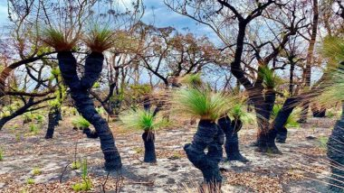 Photos of Plants Regrowing in Australia's Burnt Out Forests After Rain Shows the Beauty and Power of Nature