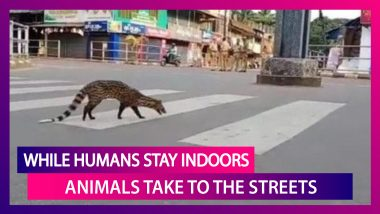 India Under Lockdown: While Humans Stay At Home, Animals Take To The Streets