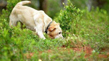 Sniffer Dog 'Tunga' Runs 12 Km to Help Police Arrest Murder Accused in Karnataka's Basavapattana