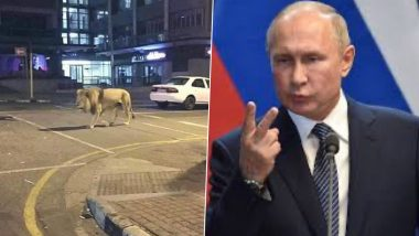 Fact Check: News of Russian President Vladimir Putin Released 800 Lions and Tigers in Streets Shared on Social Media is FAKE