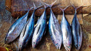 West Bengal Govt Starts Selling Fish Online to Beat Price Rise Amid Coronavirus Lockdown