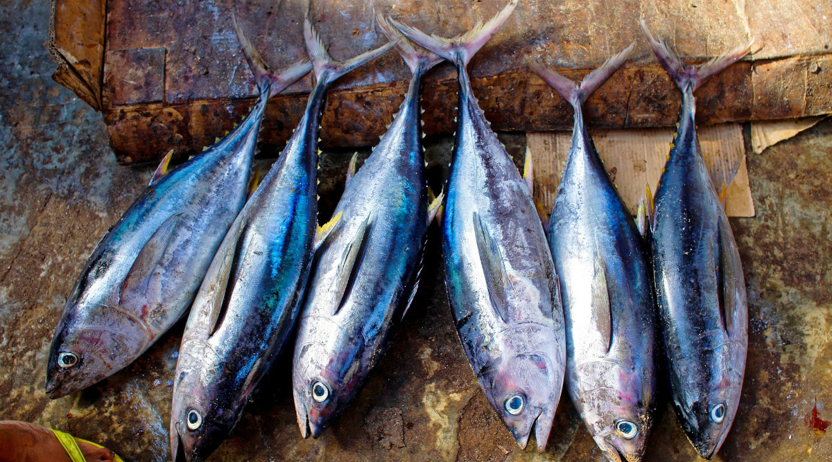 West Bengal Govt Starts Selling Fish Online to Beat Price Rise Amid Coronavirus Lockdown