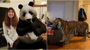 Google 3D Animals AR Feature: From Lion, Giant Panda, Tiger, Cat to Penguin, View Full List of Animals, Birds And Reptiles That Will Give You Company in Lockdown!