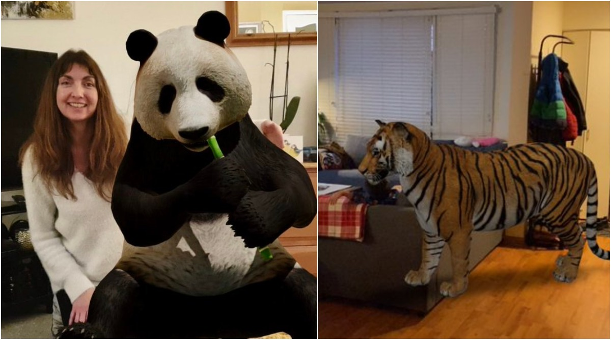 Google 3d Animals Ar Feature From Lion Giant Panda Tiger Cat