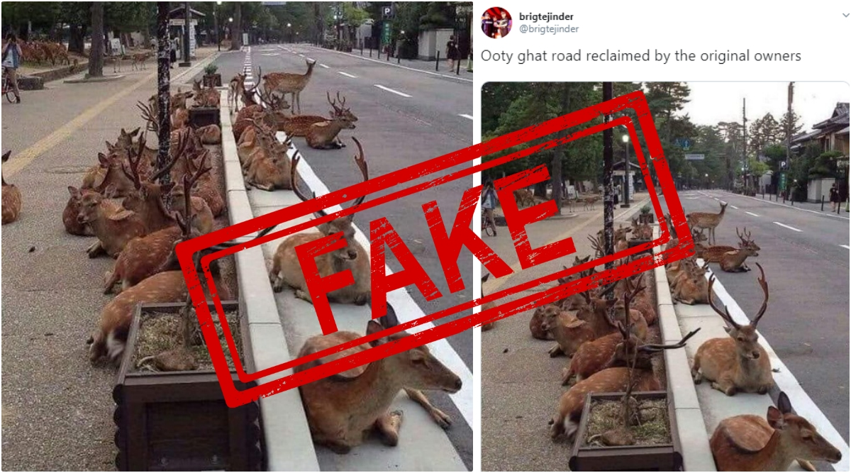 Fact Check: Ooty Ghat Road Reclaimed by Herd of Deer? Know Truth Behind The Viral Image
