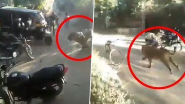 Man vs Wild: Lion Charges Towards Villagers in Gujarat's Madhavpur, Viral Video Scares Netizens