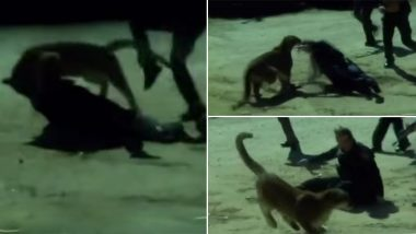Colorado Female Cop Fights Off Mountain Lion With Bare Hands to Save a Civilian! (Watch Video)