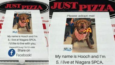 New York Pizzeria Puts Pet Adoption Appeals on Pizza Boxes, Unique Idea Helps Animals Get Homes