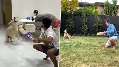 After Kane Williamson's Sandy, Shreyas Iyer's Pet Dog Betty Also Nails Slip Catch