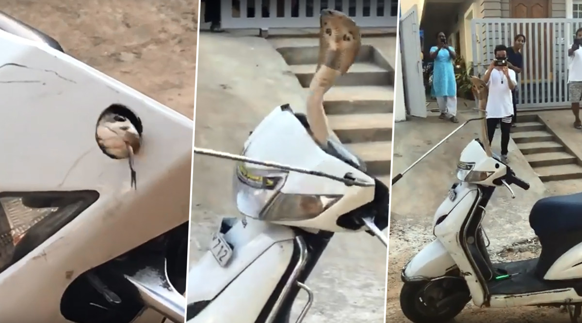 Ssscary Ride! Cobra Found Hissing Inside Handle of Scooty, Watch The Snake Rescue Video That Will Make Your Skin Crawl