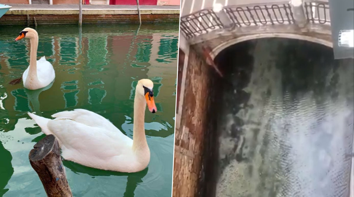 Venice Canals Become Clean, Fish And Swan Return, Smog Reduce Amid Coronavirus Lockdown in Italy (See Pictures And Videos)