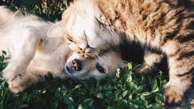 Loss of a Pet Can Potentially Trigger Mental Health Issues in Children, Reveals Study