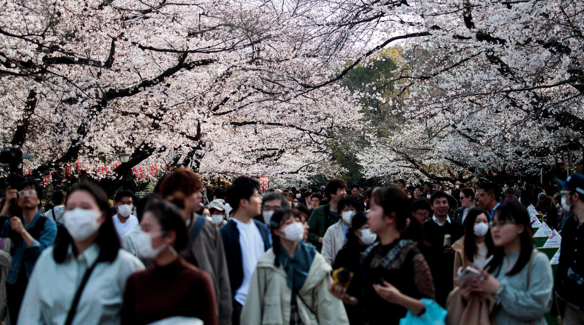 Japanese People Gather in Parks and Party Together to Witness Cherry Blossoms Amid Coronavirus Spread (Watch Video)