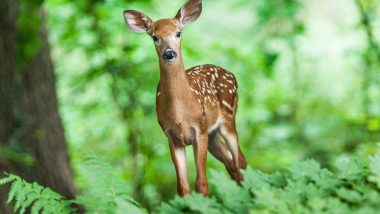 US Reports World's First Case of COVID-19 in Wild White-Tailed Deer in Ohio