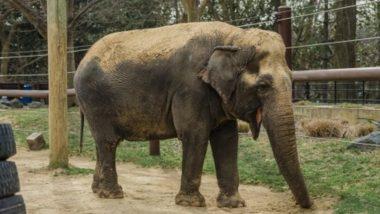 Chhattisgarh: 65-Year-Old Man Trampled to Death by Wild Elephants in Korba